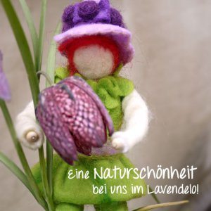 Schachbrettblume im Lavendelo