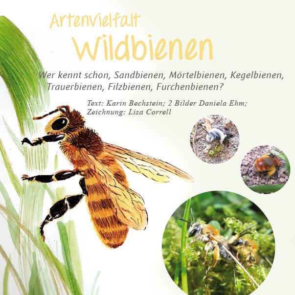 Wildbienenartikel im Lavendelo Heft 3