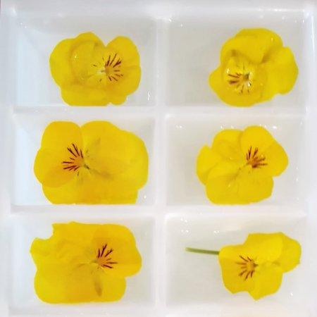 Eis Blüten