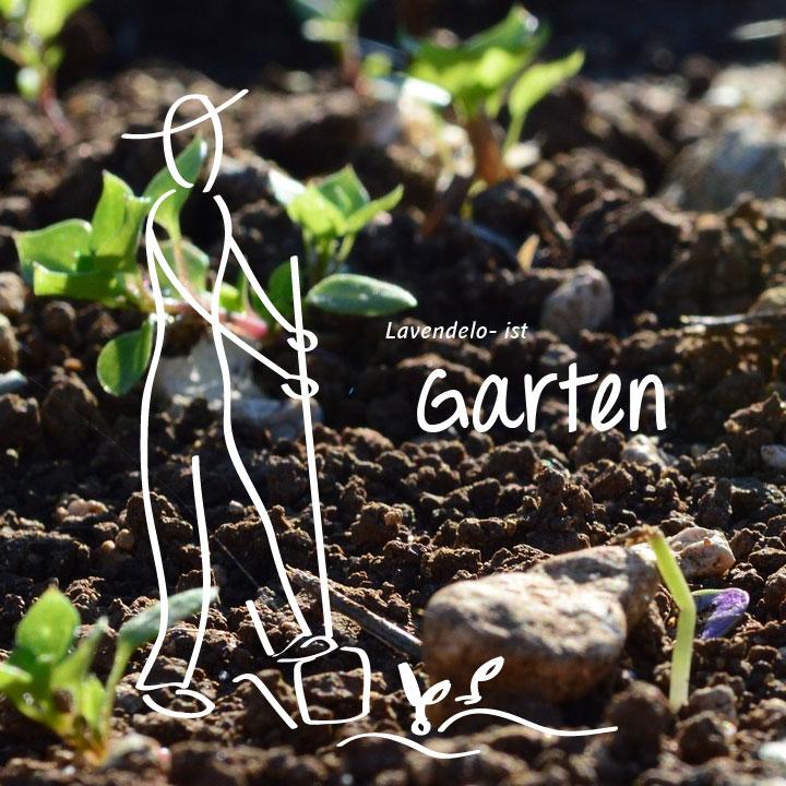 Lavendelo ist Garten