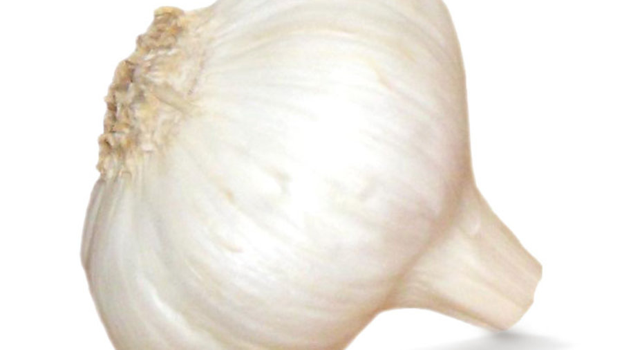 Knoblauchsud hilft gegen Blattläuse