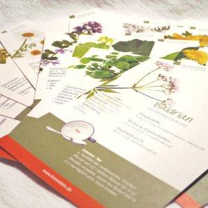 Wildkräuterkarten einzeln vom Lavendelo-Verlag