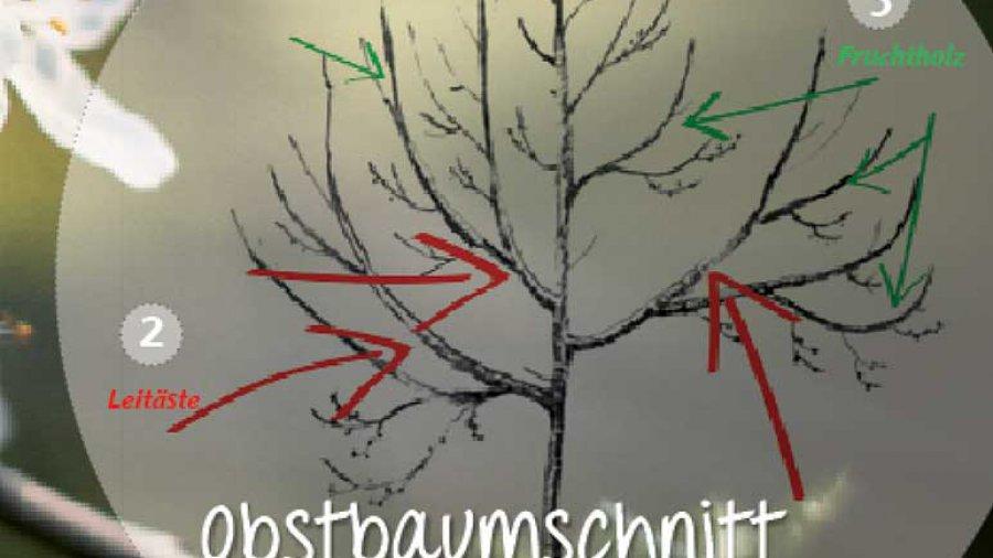 Obstbaumschnitt Kronenaufbau