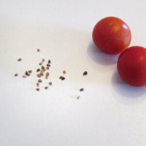 Tomaten aussaeen im Februar